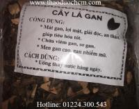 Mua bán cây lá gan tại huyện Từ Liêm giúp trị men gan cao hiệu quả nhất