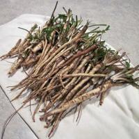 Mua bán trà hoa cúc khô tại huyện Từ Liêm giúp kháng khuẩn hiệu quả nhất