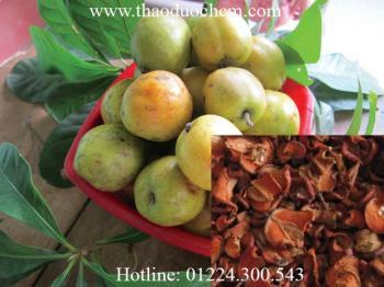 Mua bán táo mèo ở TP HCM giúp giảm mỡ bụng hiệu quả