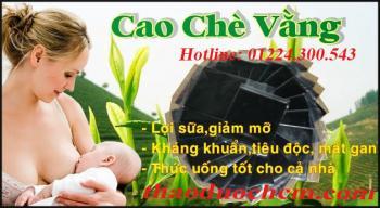 Mua bán cao chè vằng tại Bình Thuận có tác dụng trị viêm tuyến sữa tốt