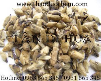 Mua bán tân di hoa tại Bình Thuận có công dụng chữa viêm mũi dị ứng