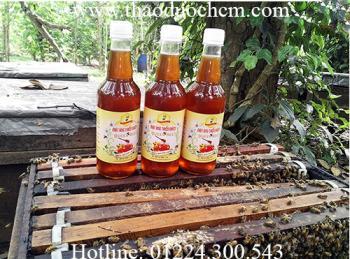 Mua bán mật ong nguyên chất (mật ong rừng) quận gò vấp có tác dụng chữa bỏng