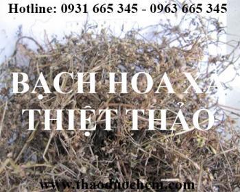 Mua bán bạch hoa xà thiệt thảo tại huyện đan phượng có tác dụng điều trị mụn nhọt