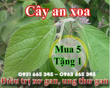 Mua bán cây an xoa tại huyện quốc oai rất tốt trong việc giải độc gan
