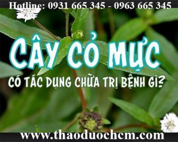Mua bán cây cỏ mực tại huyện Mê Linh có tác dụng trị viêm họng an toàn