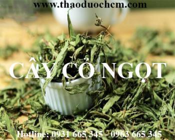 Mua bán cây cỏ ngọt tại huyện sóc sơn rất tốt trong trị chảy máu chân răng