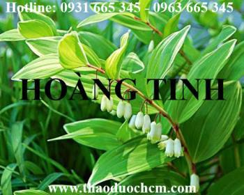 Mua bán cây hoàng tinh tại Lạng Sơn giúp tăng huyết áp rất hiệu quả