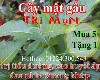 Mua cây mật gấu tại Hà Nội uy tín chất lượng tốt nhất