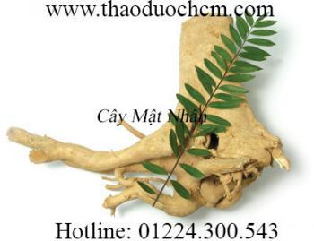 Mua bán cây mật nhân tại quận Thanh Xuân giúp giảm stress hiệu quả nhất