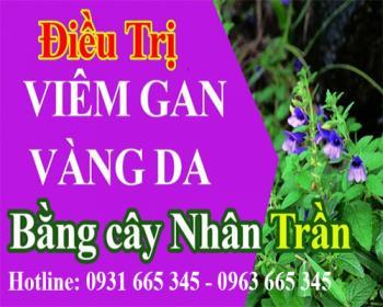 Mua bán cây nhân trần tại huyện thanh oai giúp ngăn ngừa viêm túi mật