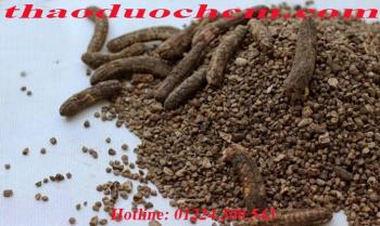 Mua bán chuối hột rừng ở Thái Bình hỗ trợ chữa trị đau lưng tốt nhất