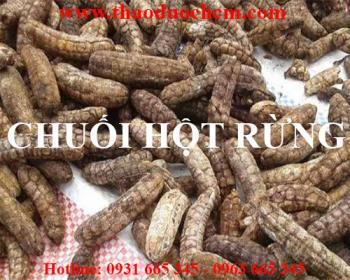 Mua bán chuối hột rừng tại huyện phúc thọ chữa bệnh đau lưng tốt nhất