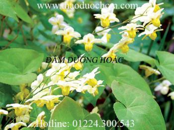 Mua bán dâm dương hoắc tại Quảng Ninh có tác dụng ức chế vi khuẩn lao