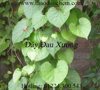 Mua bán dây đau xương tại Quảng Ninh hỗ trợ điều trị bong gân tốt nhất