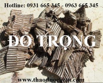 Mua bán đỗ trọng tại huyện Sóc Sơn rất tốt trong việc làm chắc khỏe xương