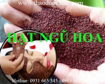 Mua bán hạt đình lịch tại Ninh Thuận hỗ trợ hút mụn làm sạch lỗ chân lông