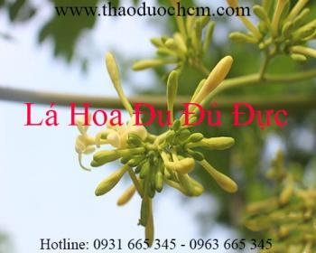 Mua bán lá hoa đu đủ đực ở Thái Nguyên giúp điều trị sỏi thận hiệu quả