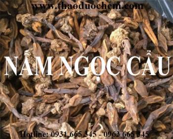 Mua bán nấm ngọc cẩu tại huyện Phúc Thọ có tác dụng chữa các bệnh tiêu hóa