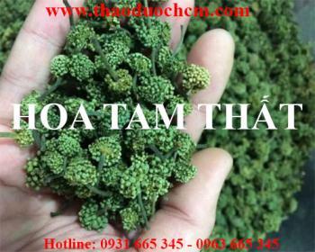 Mua hoa tam thất tại Hà Nội uy tín chất lượng tốt nhất