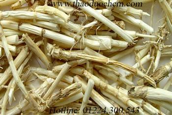 Mua bán rễ cỏ tranh tại đồng nai | Bán Rễ cỏ tranh giúp trị nóng sốt