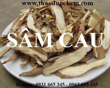 Mua bán sâm cau tại Hà Nội uy tín chất lượng tốt nhất