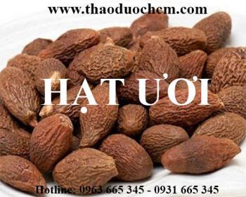 Mua hạt ươi tại Hà Nội uy tín chất lượng tốt nhất