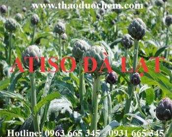 Mua bán hoa atiso tại huyện quốc oai rất tốt trong việc làm hạ men gan