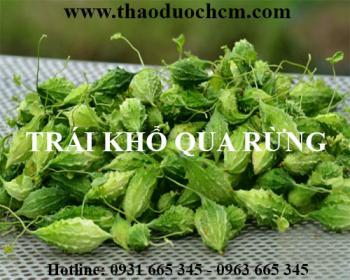 Mua khổ qua rừng tại Hà Nội uy tín chất lượng tốt nhất