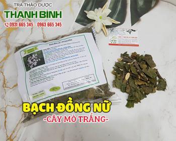 Mua bán bạch đồng nữ (mò trắng) ở huyện Bình Chánh hỗ trợ trị mụn nhọt, lở ngứa
