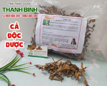 Mua bán cà độc dược ở quận Tân Phú giúp trị mụn nhọt sưng đau hiệu quả