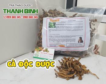 Mua bán cà độc dược tại TPHCM uy tín chất lượng tốt nhất