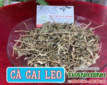 Công dụng của cà gai leo - Cà gai leo mua tại thảo dược Thanh Bình