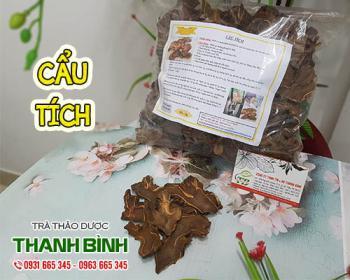 Mua bán cẩu tích ở quận Bình Tân giúp trị tiểu tiện nhiều, không tự chủ