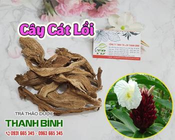 Mua bán cây cát lồi ở quận Bình Tân giúp thanh nhiệt cơ thể, mát gan