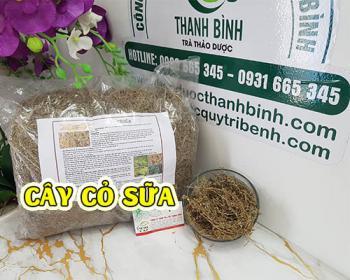 Mua bán cây cỏ sữa tại TPHCM uy tín chất lượng tốt nhất