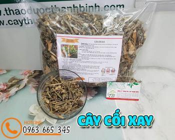 Mua bán cây cối xay tại TPHCM uy tín chất lượng tốt nhất