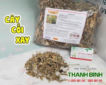 Mua bán cây cối xay ở huyện Hóc Môn hỗ trợ trị bệnh trĩ, giúp thanh nhiệt