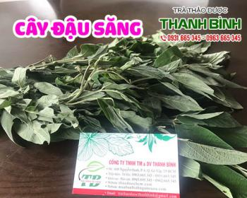 Mua bán cây đậu săng ở huyện Hóc Môn giúp điều trị sốt ở trẻ khi mọc răng