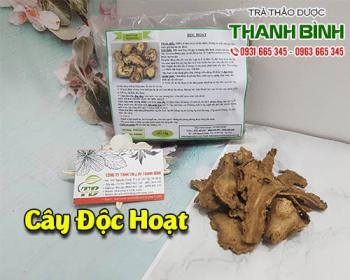 Mua bán độc hoạt ở quận Tân Bình giúp điều trị đau nhức đầu gối, lưng mỏi
