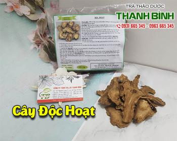 Mua bán độc hoạt ở quận Bình Tân giúp nhuận tràng, trị táo bón rất tốt
