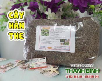 Cách sử dụng cây hàn the trong điều trị sốt cao, viêm phế quản tốt nhất