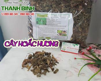 Mua bán cây hoắc hương tại TPHCM uy tín chất lượng tốt nhất
