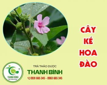 Mua bán cây ké hoa đào tại quận 12 giúp giảm sưng tấy, giảm đau rát họng