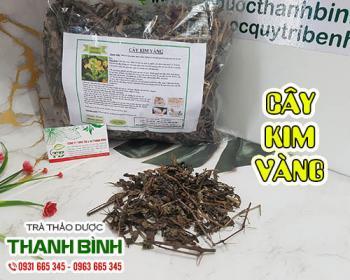 Mua bán cây kim vàng ở quận Bình Tân giúp trị viêm chân răng, sâu răng