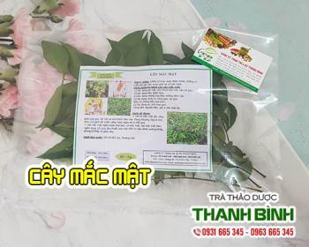 Mua bán cây mắc mật tại TPHCM uy tín chất lượng tốt nhất