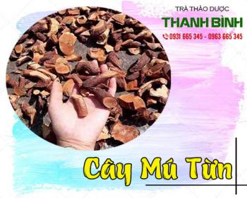Mua bán cây mú từn tại TPHCM uy tín chất lượng tốt nhất