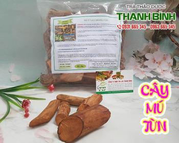 Địa điểm bán cây mú từn tại Hà Nội giúp giảm đau nhức mỏi tốt nhất