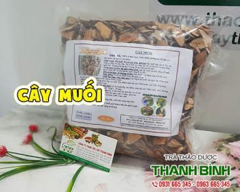 Mua bán cây muối tại TPHCM uy tín chất lượng tốt nhất
