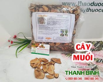 Mua bán cây muối ở huyện Bình Chánh giúp điều trị ho lâu ngày và kiết lỵ