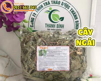 Mua bán cây ngái ở quận Bình Tân giúp điều trị sốt rét, viêm phế quản